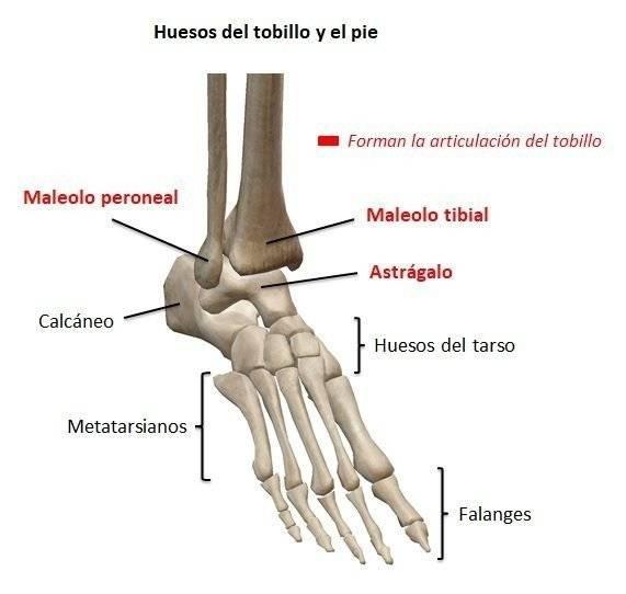Huesos del tobillo y del pie para detectar fracturas